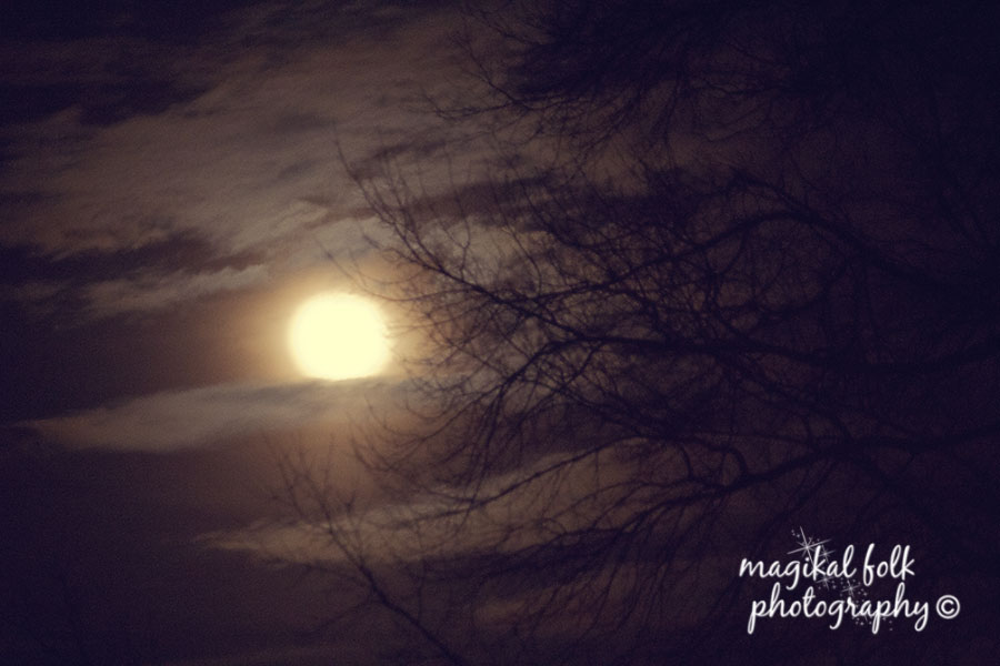 moon_and_bare_trees