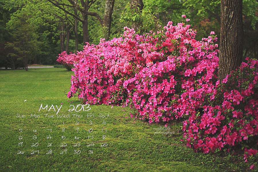 azalea may 2013 for blog