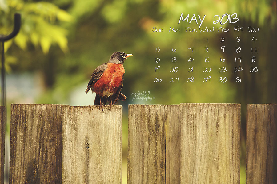 robin may 2013 for blog