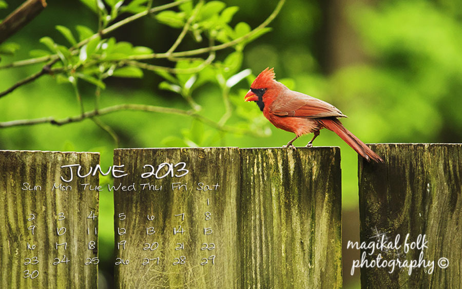 june red cardinal 2013 for blog