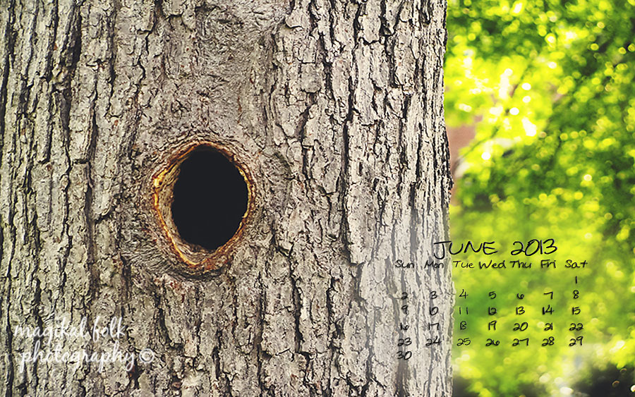 june tree hole 2013 for blog