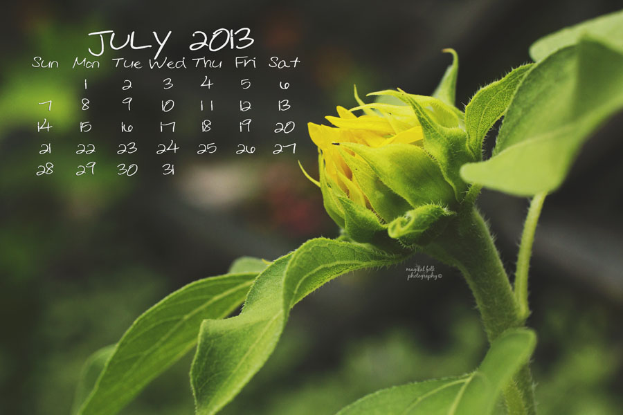 sunflower july 2013 900 x 600