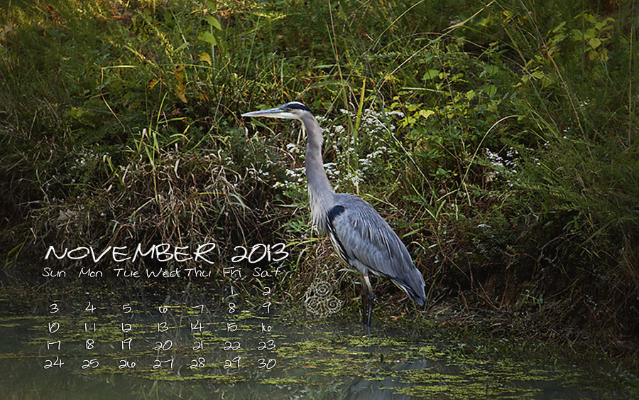 HERON NOV 2013 BLOG