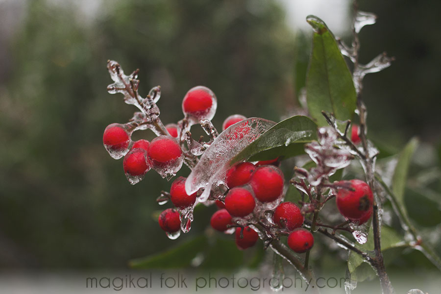berries and ice leaf